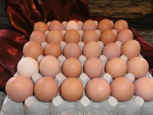 Eier von freilaufenden Hühnern